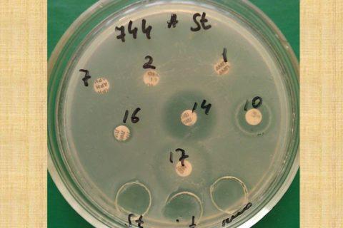 мультирезистентный_штамм_бактерии