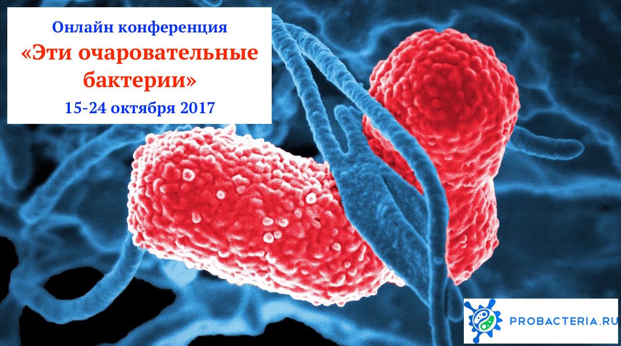 очаровательные_бактерии_конференция