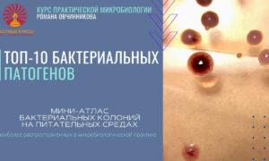 Мини-аталас бактериальных колоний_обложка