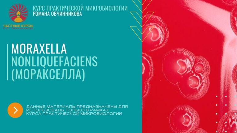 Моракселла_обложка буклета