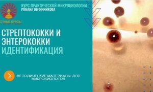 Стрептококки_методичка_обложка