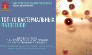Мини-аталас бактериальных колоний_Топ-10 патогенов